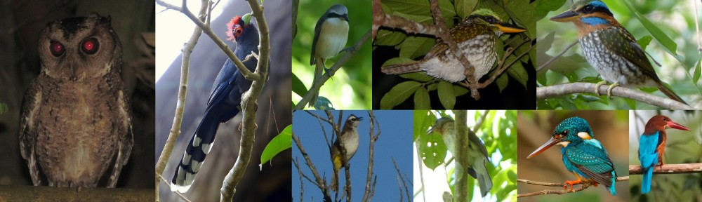 birds of tanay at lilok farm in rizal, philippines