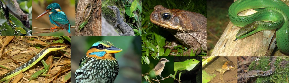 feature animals of tanay at lilok farm in rizal philippines
