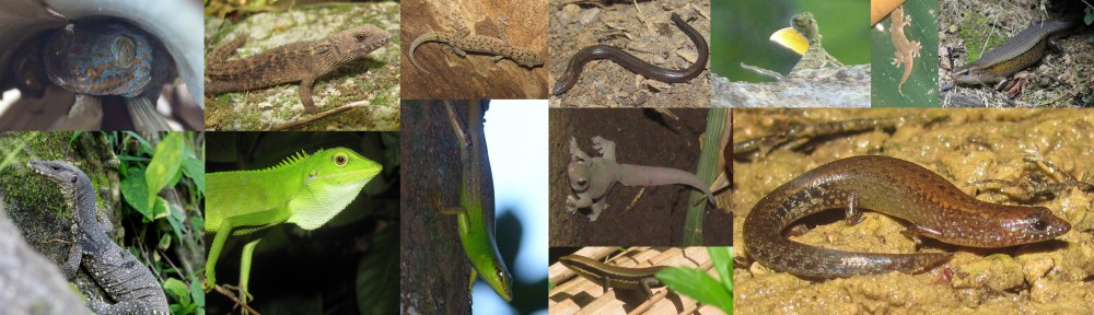 lizards of tanay at lilok farm in rizal, philippines
