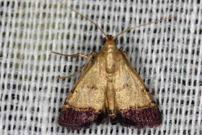 moth philippines gernot kunz